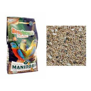 Manitoba Neophema Parakeets
