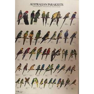Plakát AUSTRALŠTÍ PAPOUŠCI