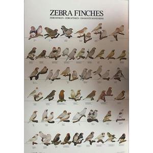 Plakát ZEBŘIČKY