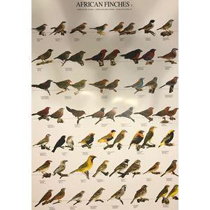 Plakát AFRIČTÍ PĚVCI 1