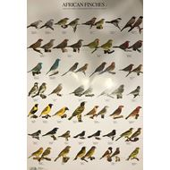 Plakát AFRIČTÍ PĚVCI 2