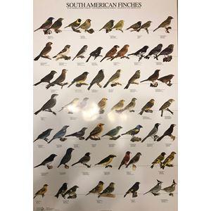 Plakát JIHOAMERIČTÍ PĚVCI