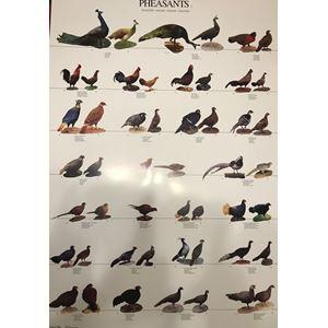 Plakát BAŽANTI 1