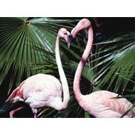 Mazuri Flamingo Breeder 20 kg