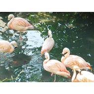 Mazuri Flamingo Maintenance 20 kg