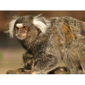 Mazuri New World Primate Gluten Free – 20 % VFI 3 kg