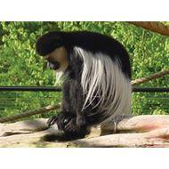 Mazuri Leaf Eater Primate 12,5 kg