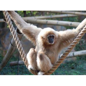 Mazuri Primate 12,5 kg