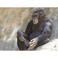 Mazuri Old World Monkey 12,5 kg