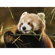 Mazuri High Fibre Red Panda 12,5 kg