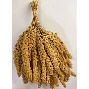 Senegalské proso v klasech žluté 1 kg